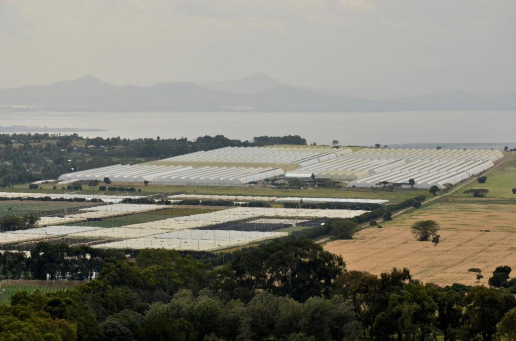 Rift Valley Roses hat vier Lagunen mit einer Gesamtkapazität von 83.000 m3.
