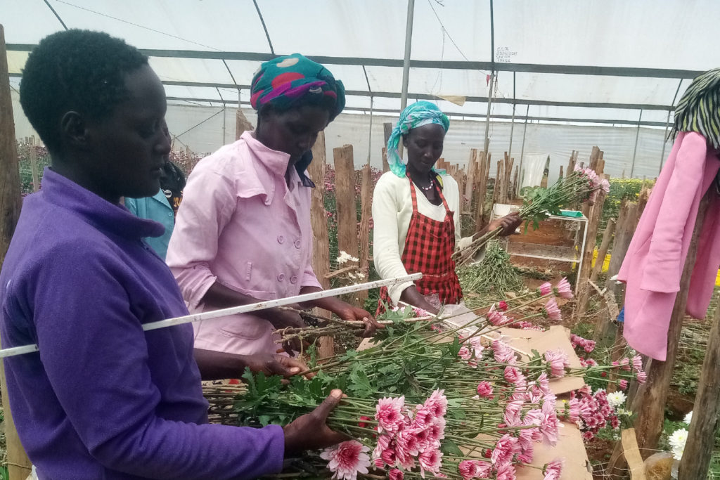 The flower farm Zena Sosiani