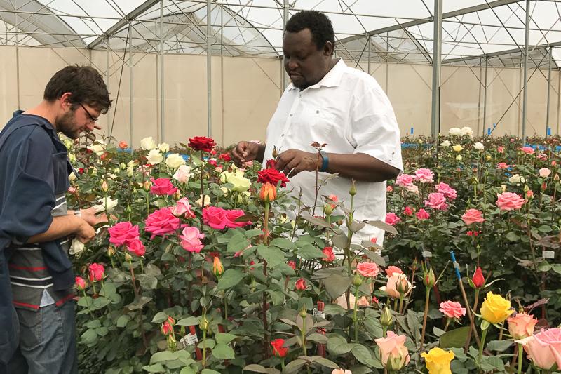 Miembros del equipo del obtentor de flores United Selections durante el trabajo.
